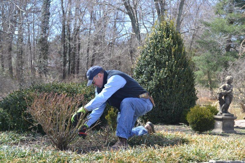 Pruning, Winter