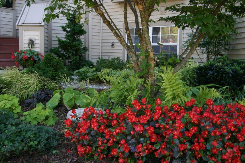 Smart Gardeners Have It Made In The Shade Merrifield Garden Center