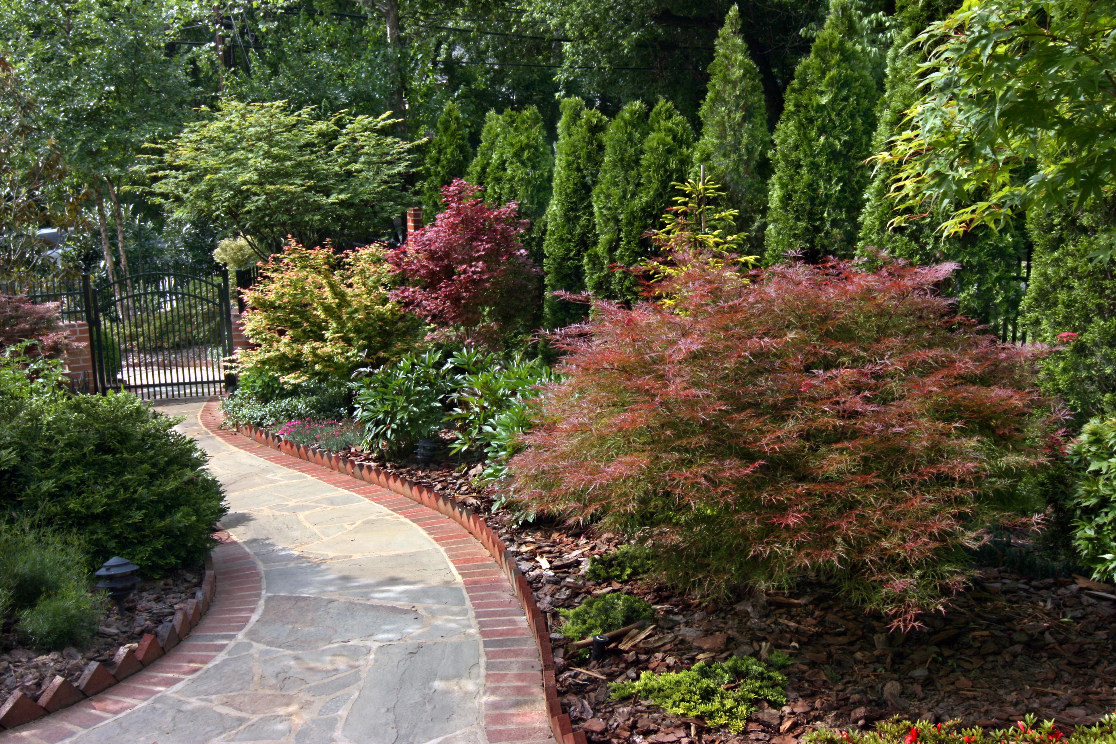 Great trees and shrubs for screening merrifield garden for Jardin ingles