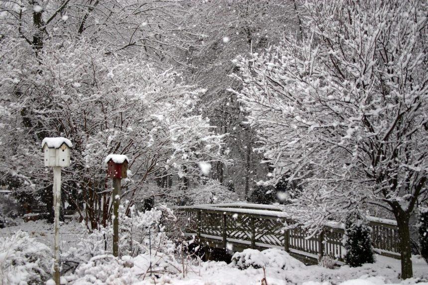 Ready Or Not Here Snow Comes Merrifield Garden Center