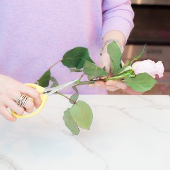 Tips for arranging your roses: Take off any unattractive or damaged rose petals and leaves.