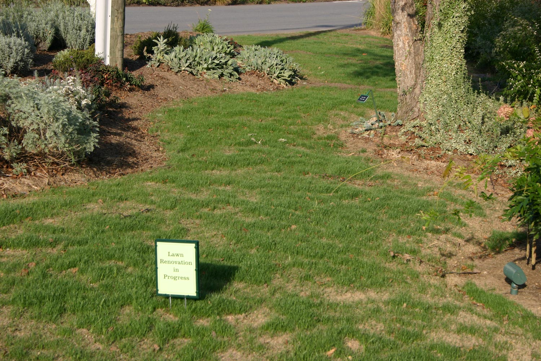Our Top Treatment Picks For Summer Grassy And Broadleaf Weeds Merrifield Garden Center