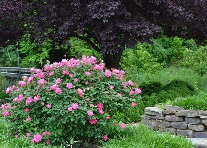 Merrifield garden center merrifield garden center - Merrifield garden center fairfax va ...