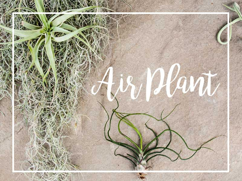 Our top 10 picks for low maintenance houseplants for Pretty low maintenance plants