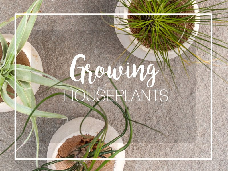 Our Top 10 Picks For Low Maintenance Houseplants Merrifield Garden Center