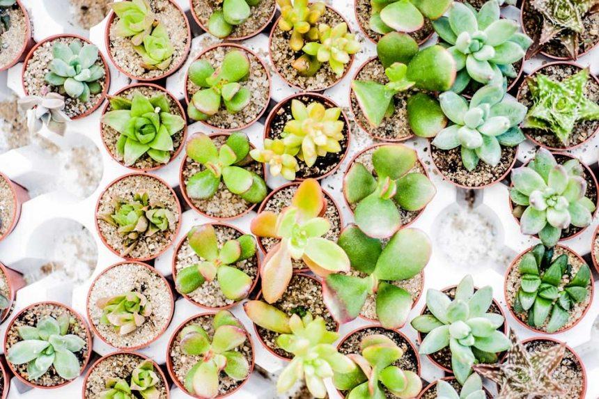 Succulent Varieties, greenhouse