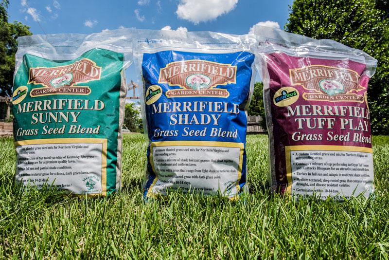 Merrifield Grass Seed