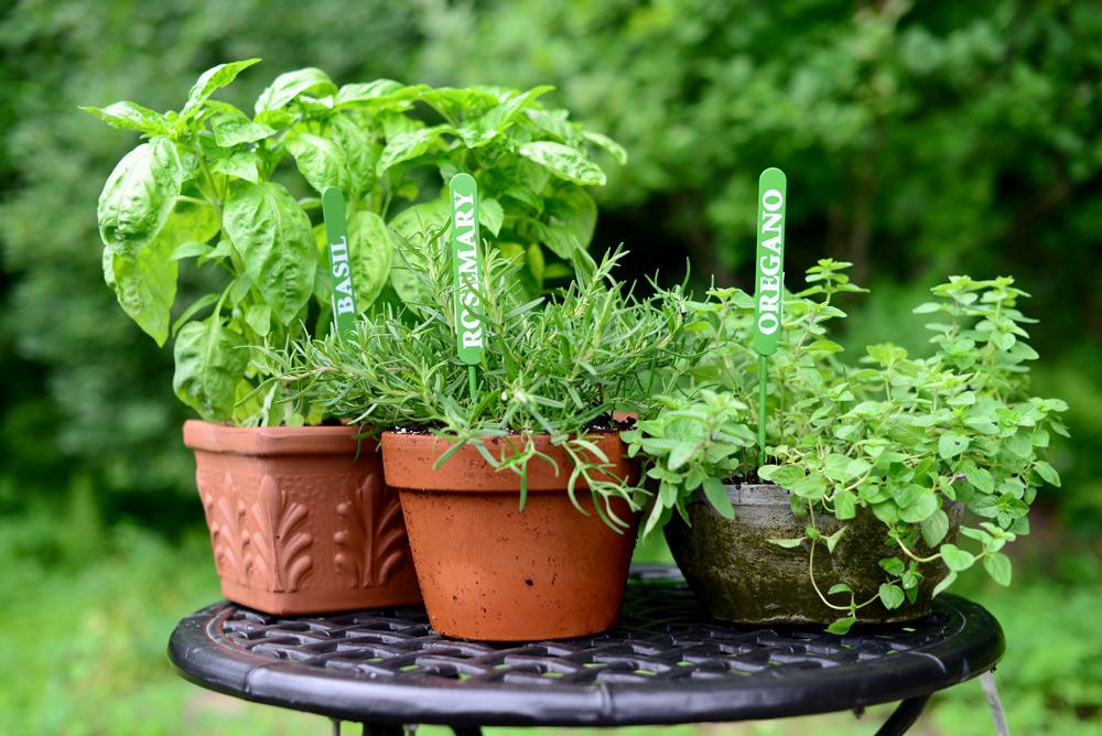 Rosemary, Orgegano and Basil, Herbs