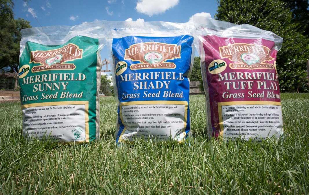 Merrifield Grass Seeds