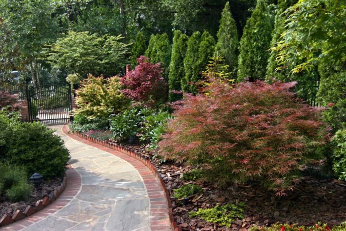 Stone and Brick Walkway, Evergreen Screen, Japanese Maple