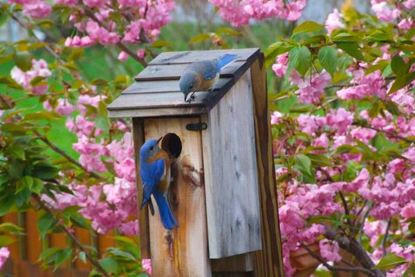 Bluebird House