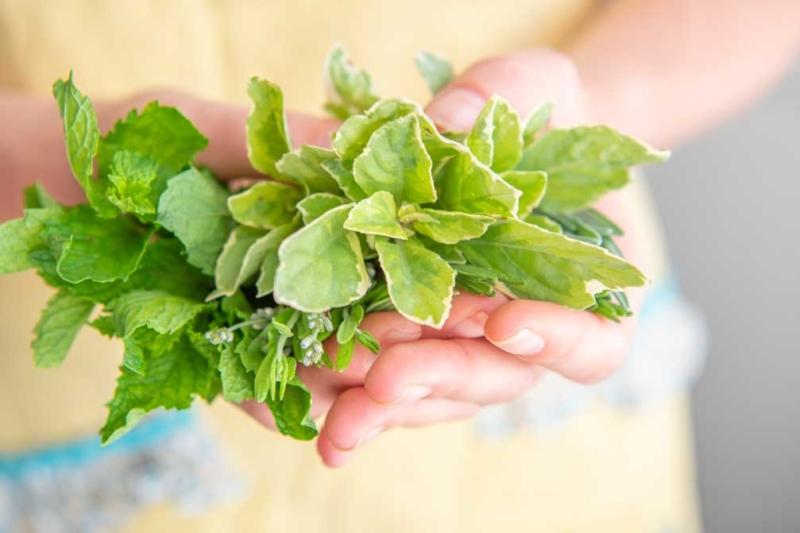 Basil Fresh Herbs