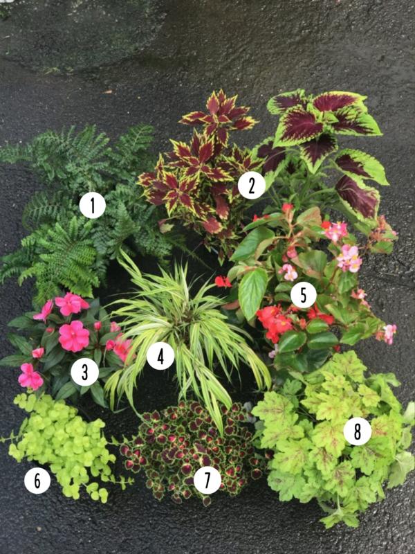 Summer Container Garden Inspiration Merrifield Garden Center