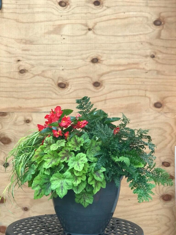 Summer Shade Container with Begonia, heuchera, Japanese stiltgrass and ferns