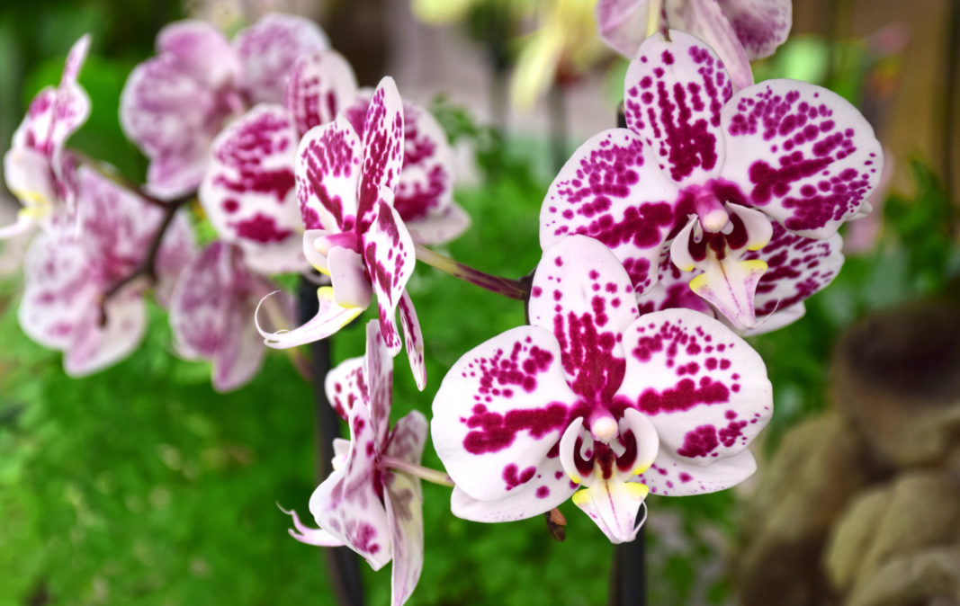 Orchid Care For Beginners Merrifield Garden Center