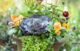 Fall container, pansy, ornamental cabbage, creeping Jenny