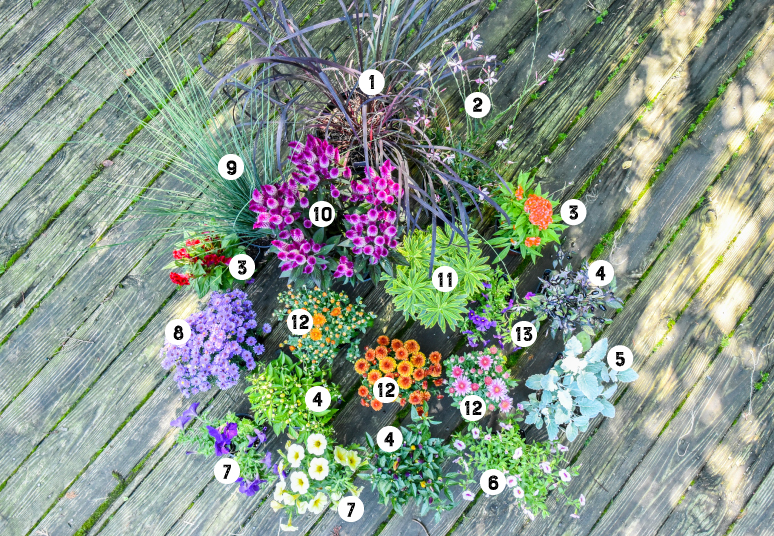 Fall Container Annuals