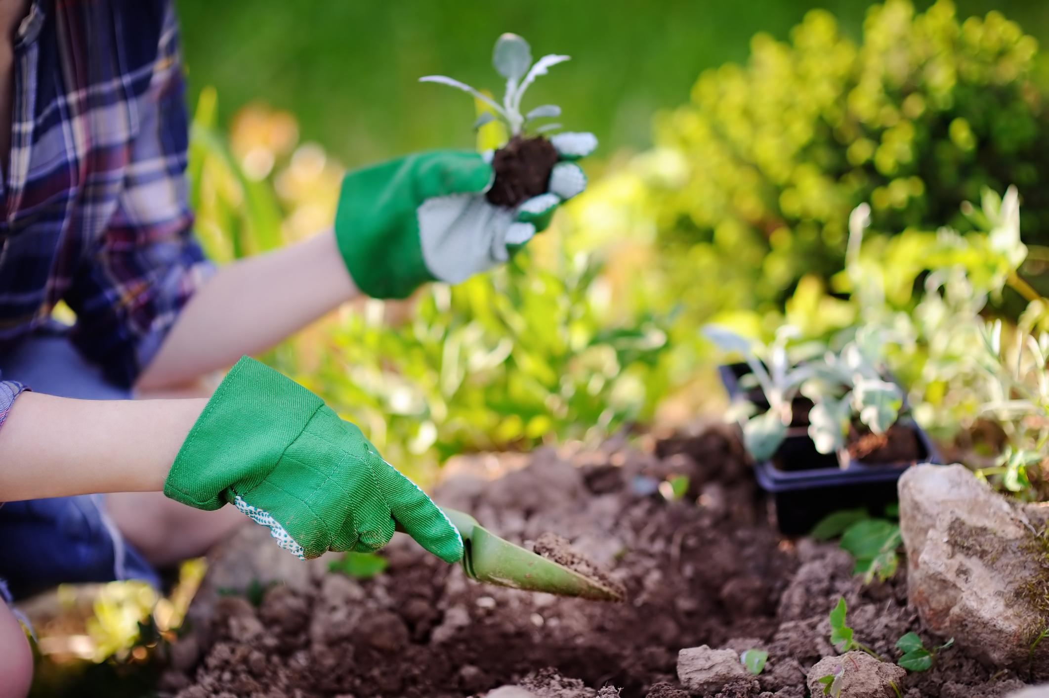 Gardening 101 Merrifield Garden Center
