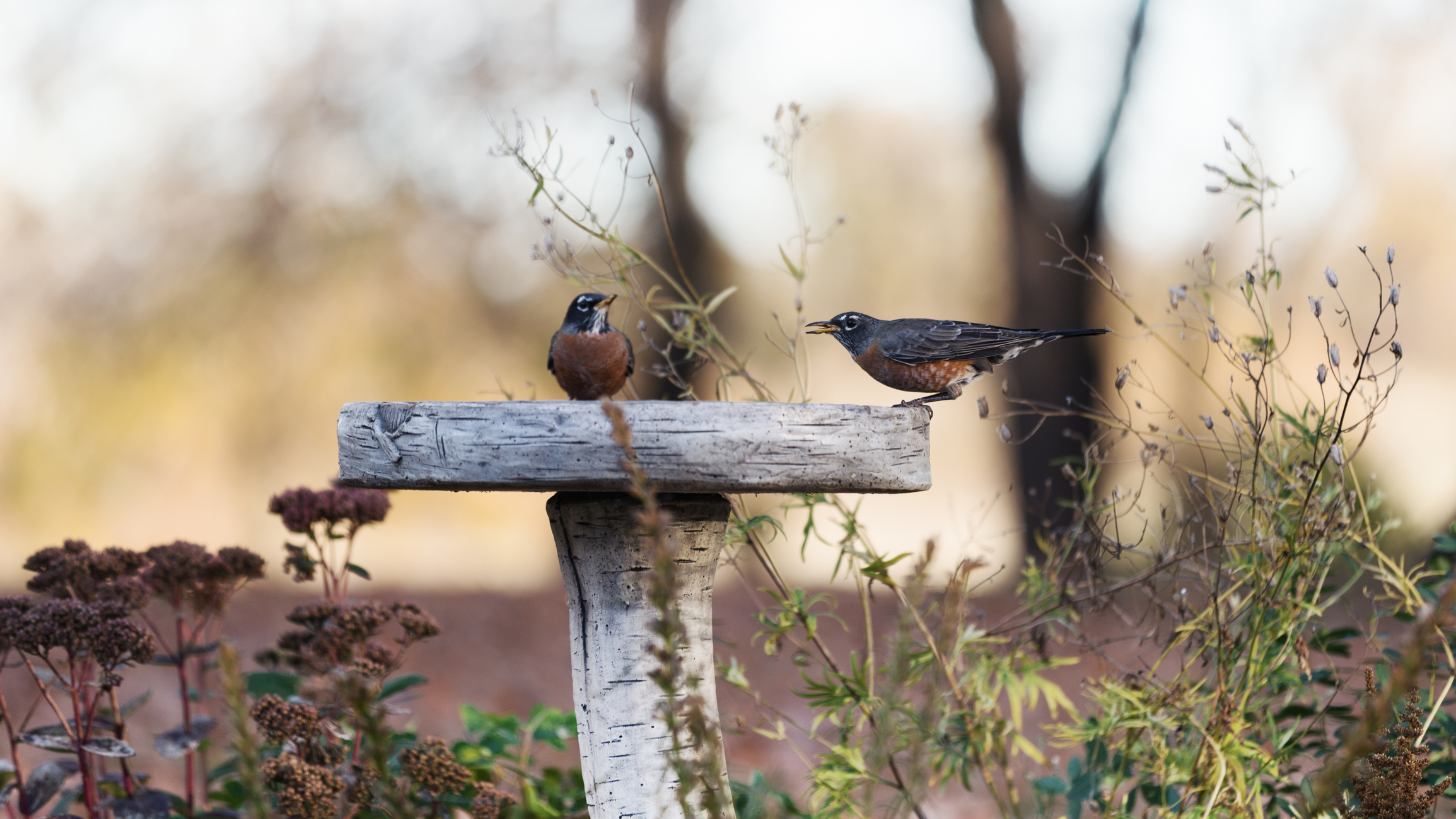 Caring for the Birds