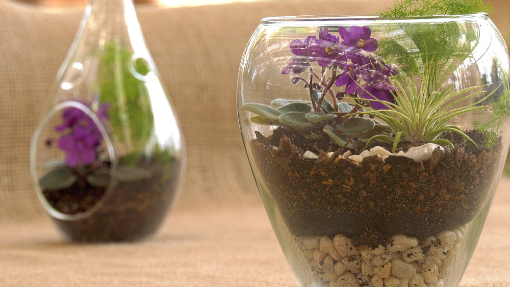 Terrarium in Glass Container
