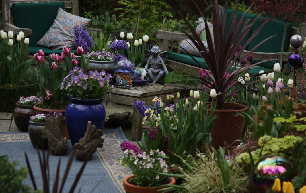 Tulips in Containers, Bulbs