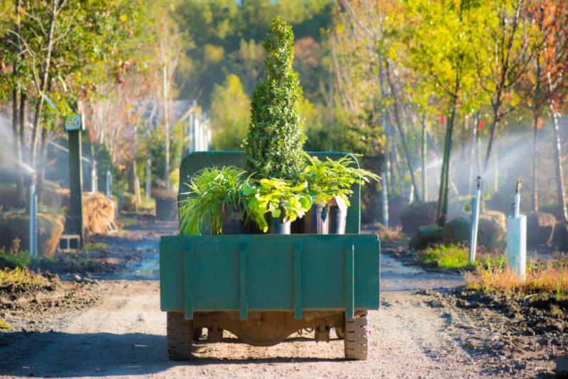 Boxwood, heuchera, japanese stiltgrass
