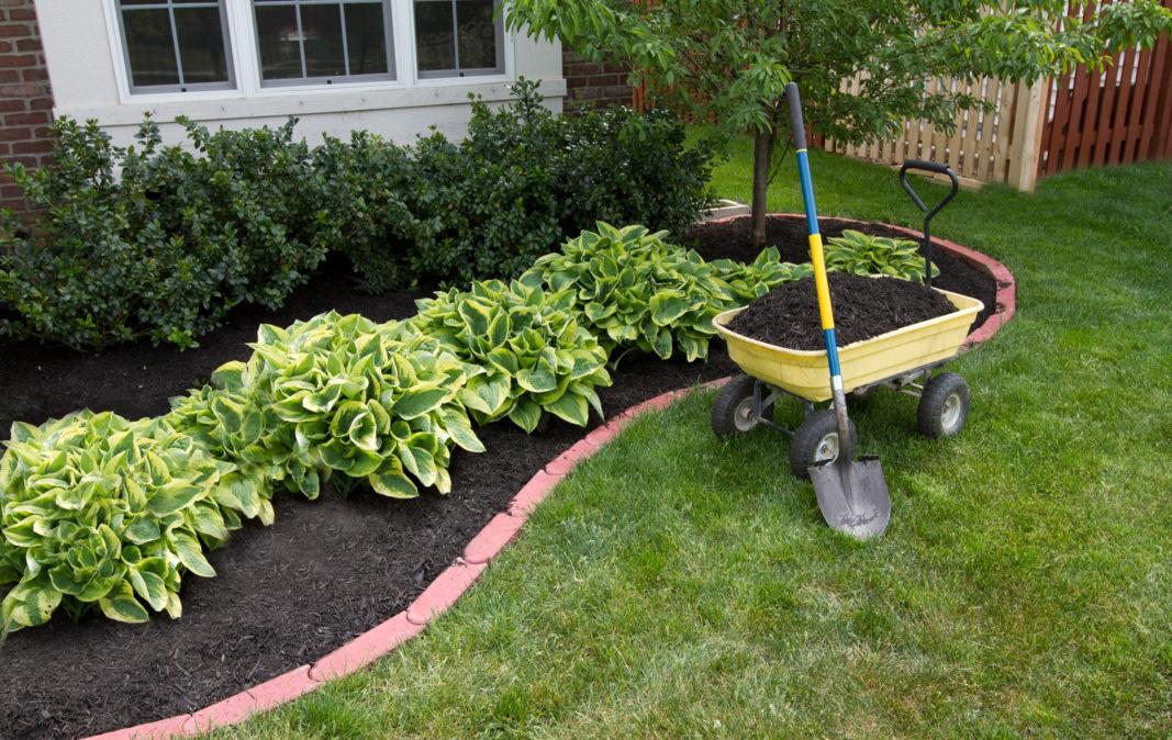 Using Mulch Properly In Landscapes Merrifield Garden Center