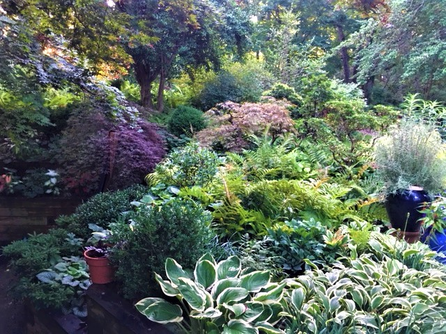 Shade Gardening Merrifield Garden Center