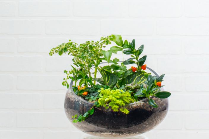 Terrarium, Greenhouse