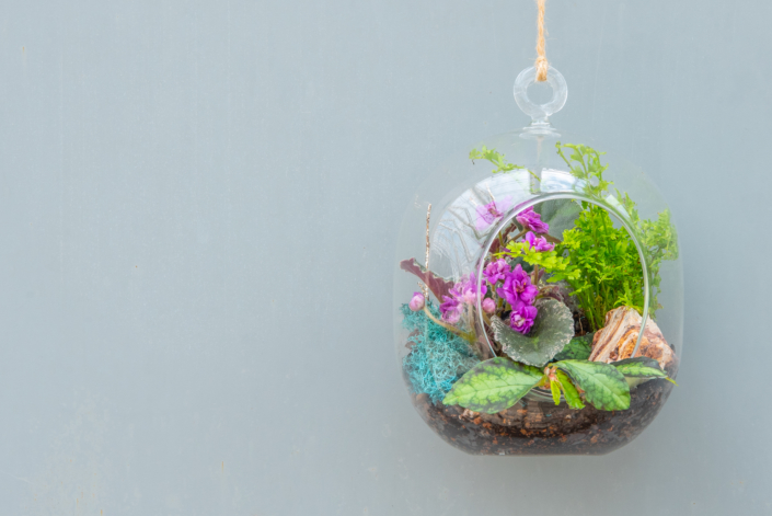 Terrarium with African Violet, Greenhouse