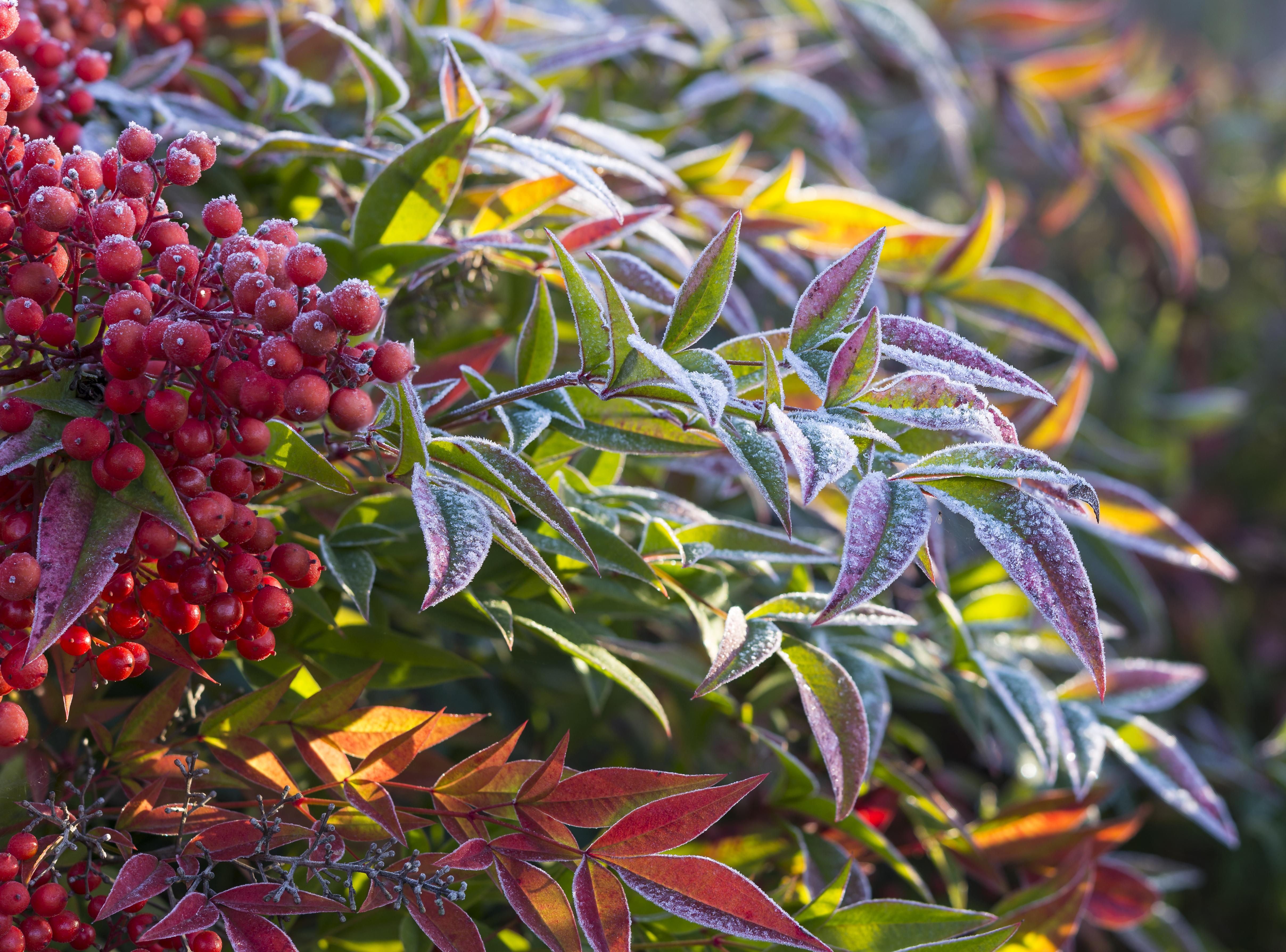 The Four Season Garden Merrifield Garden Center
