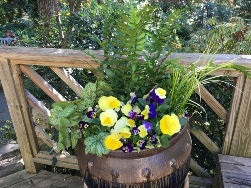 Container with Bulb Plantings below Pansy, Heuchera and Fern