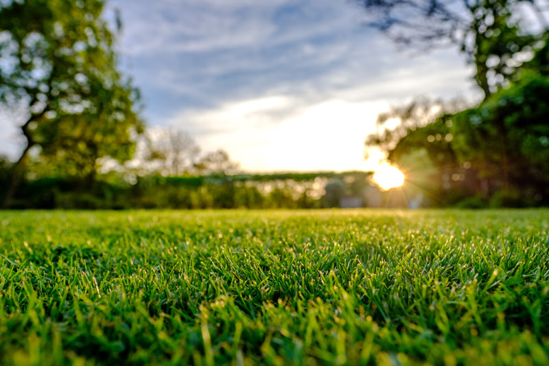Turf Tips and Lawn Care for Green Grass