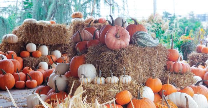 Pumpkins, Fall Decor
