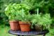 Herbs, Basil, Rosemary and Oregano