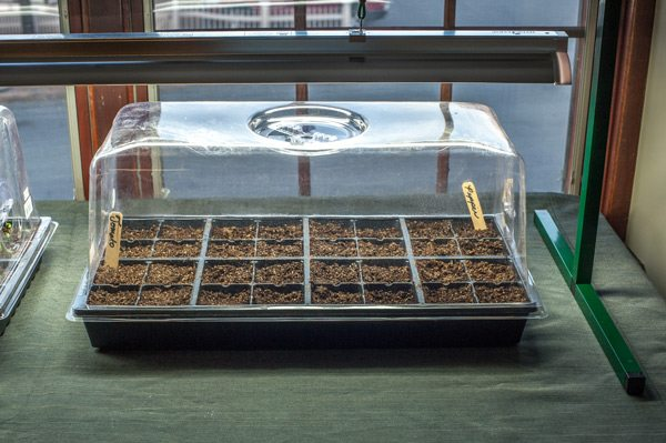 Seed Tray with Dome