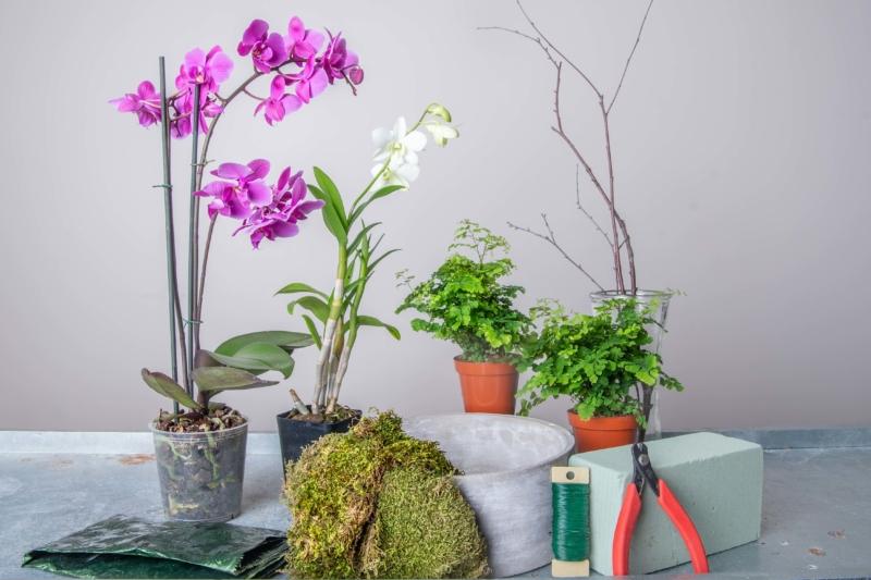 Diy Potted Orchid Garden Merrifield Garden Center