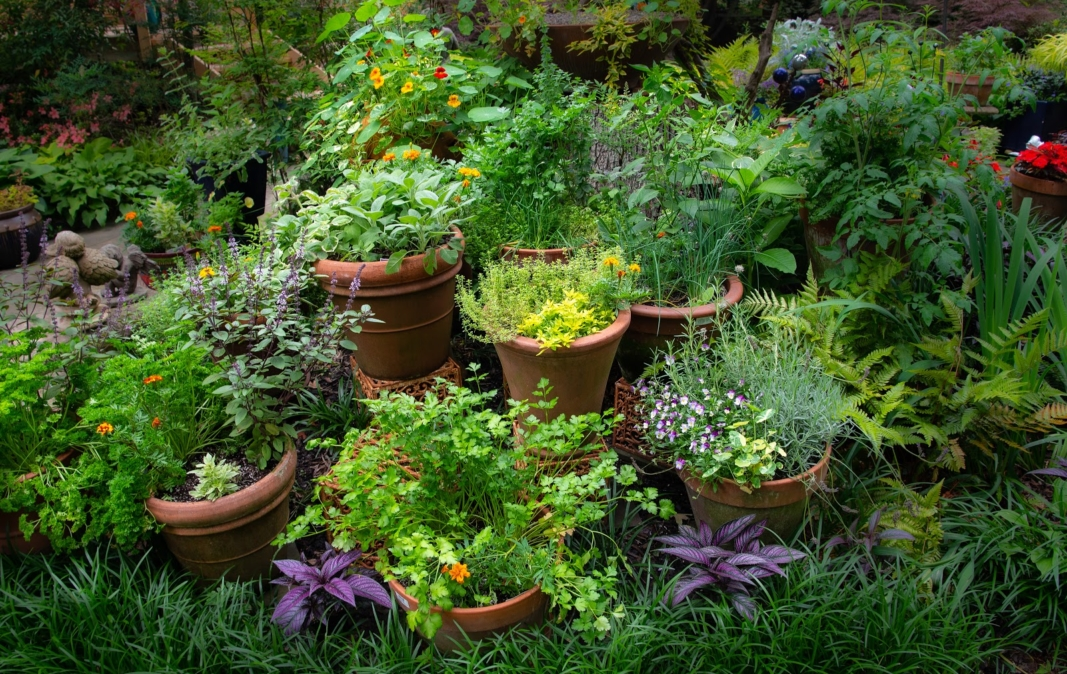 Herb Container Garden Collection