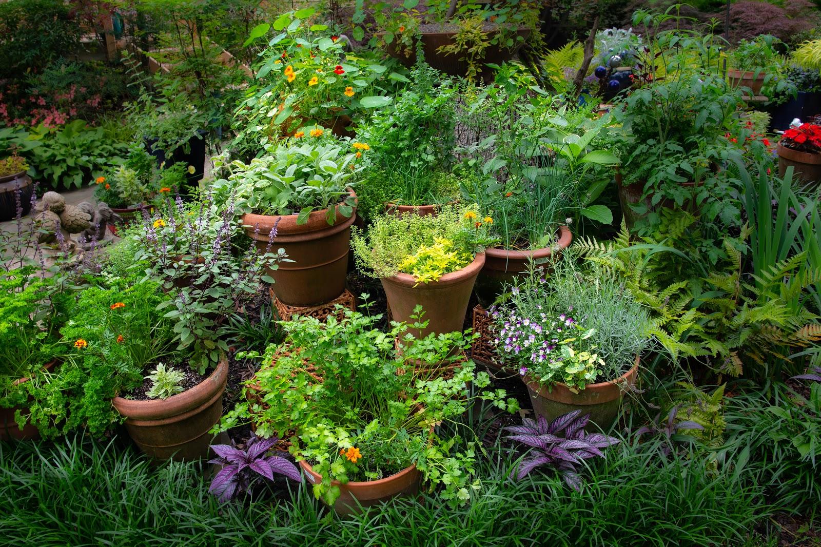 Herb Container Garden Collection