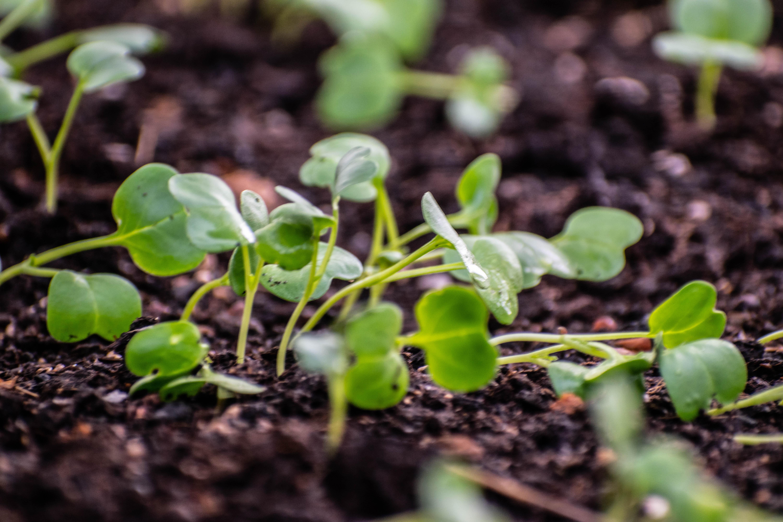 seedling, seed starting