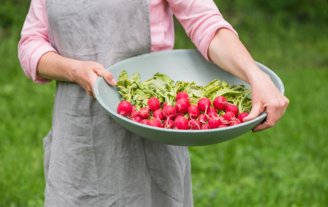 Radishes, Cool season vegetables