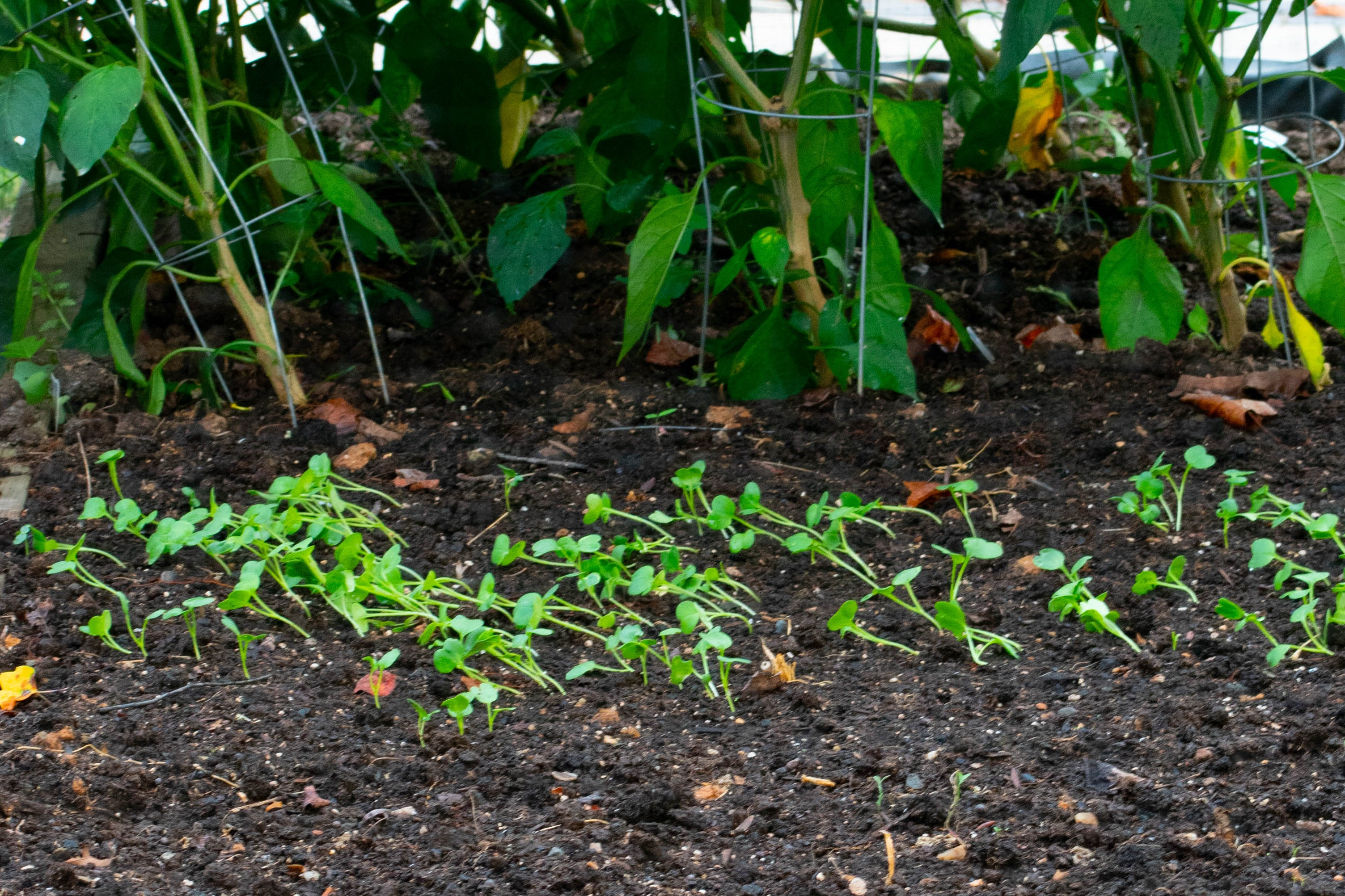 seedlings, starting seeds