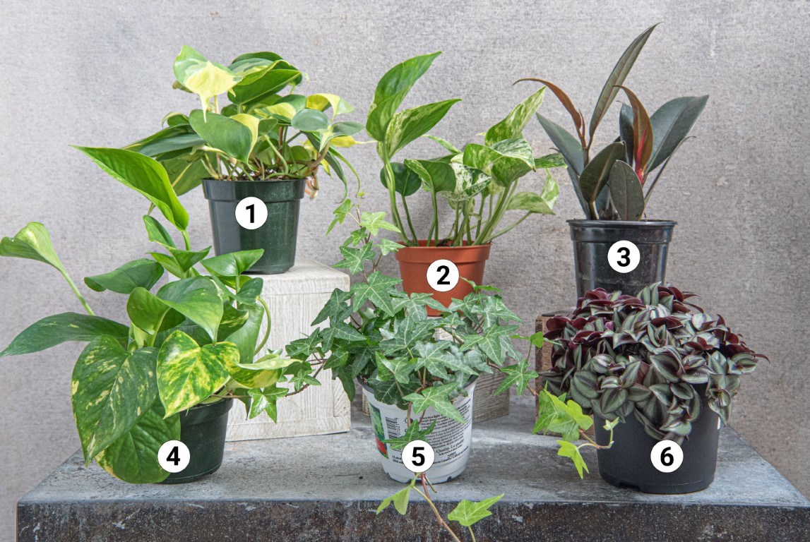 Houseplant Propagation - Good Plants to Propogate