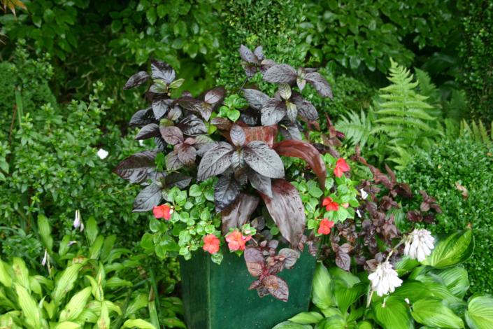 Green Container Garden