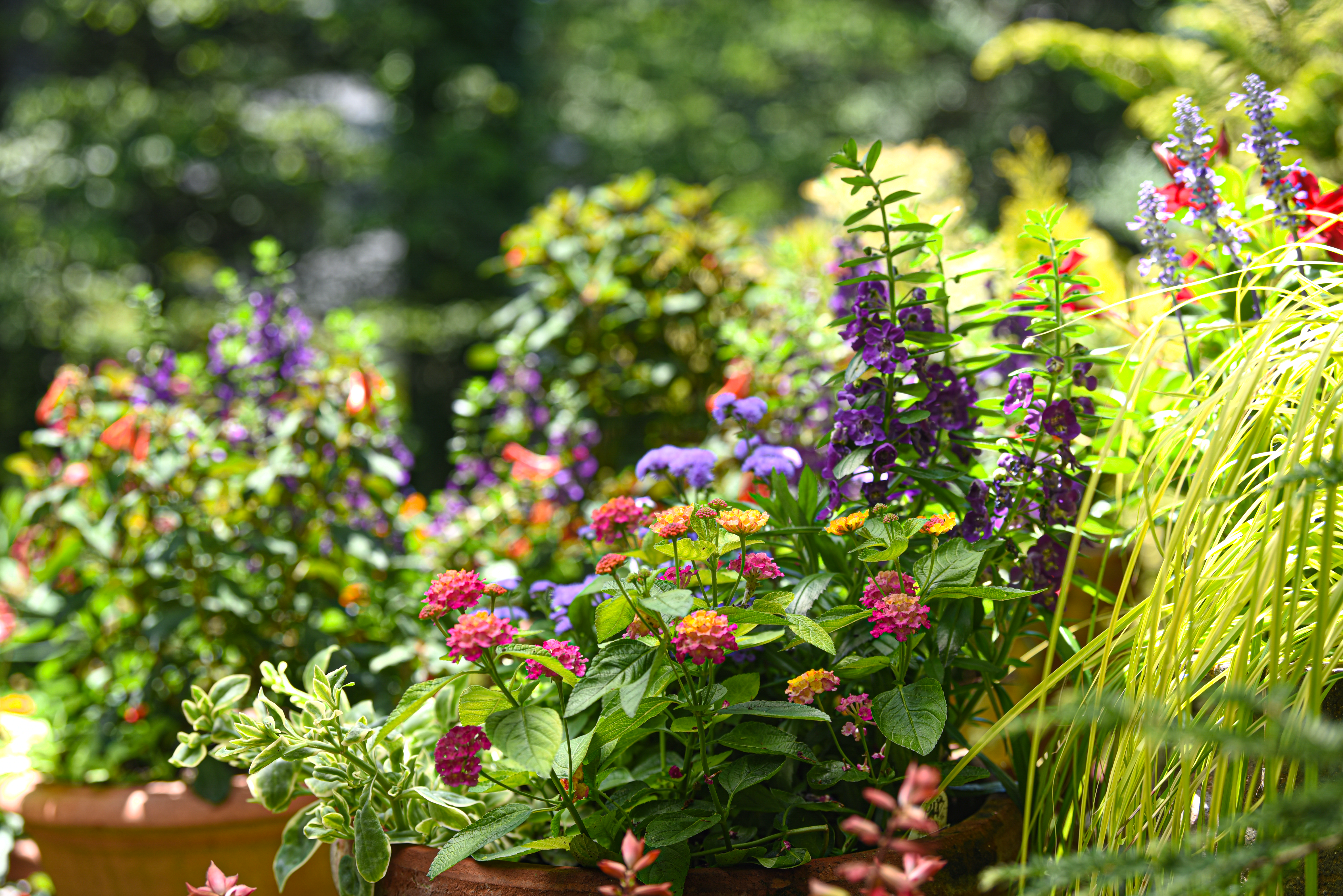 Container Gardens for Pollinators