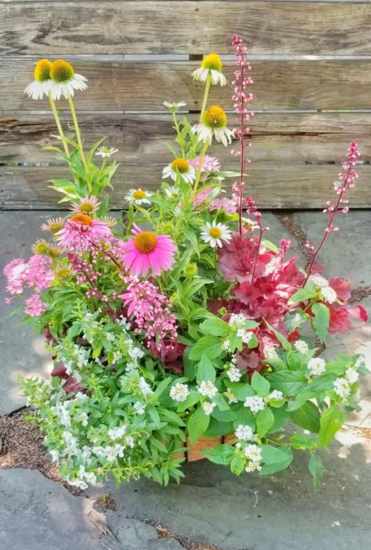 Pollinator Container Garden