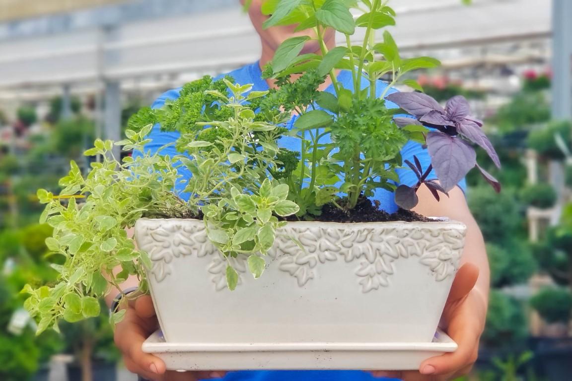Herbs - Oregano, Parsley, Mint, Basil