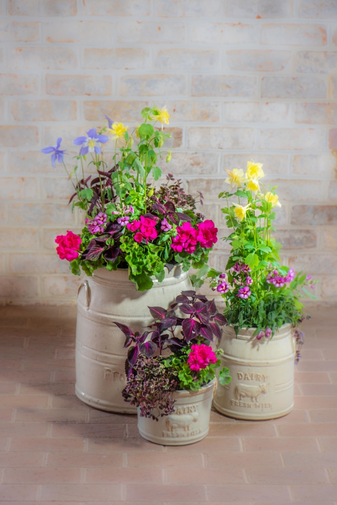 Spring Container with Columbine and Geranium