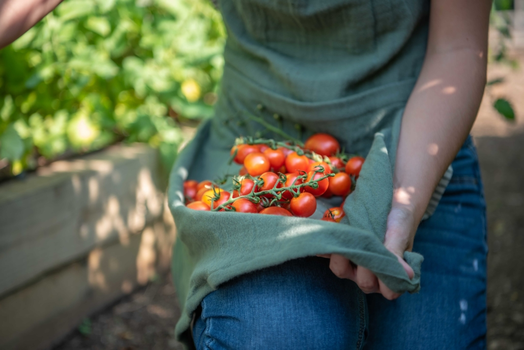 Cherry Tomatoes, Summer Vegetables
