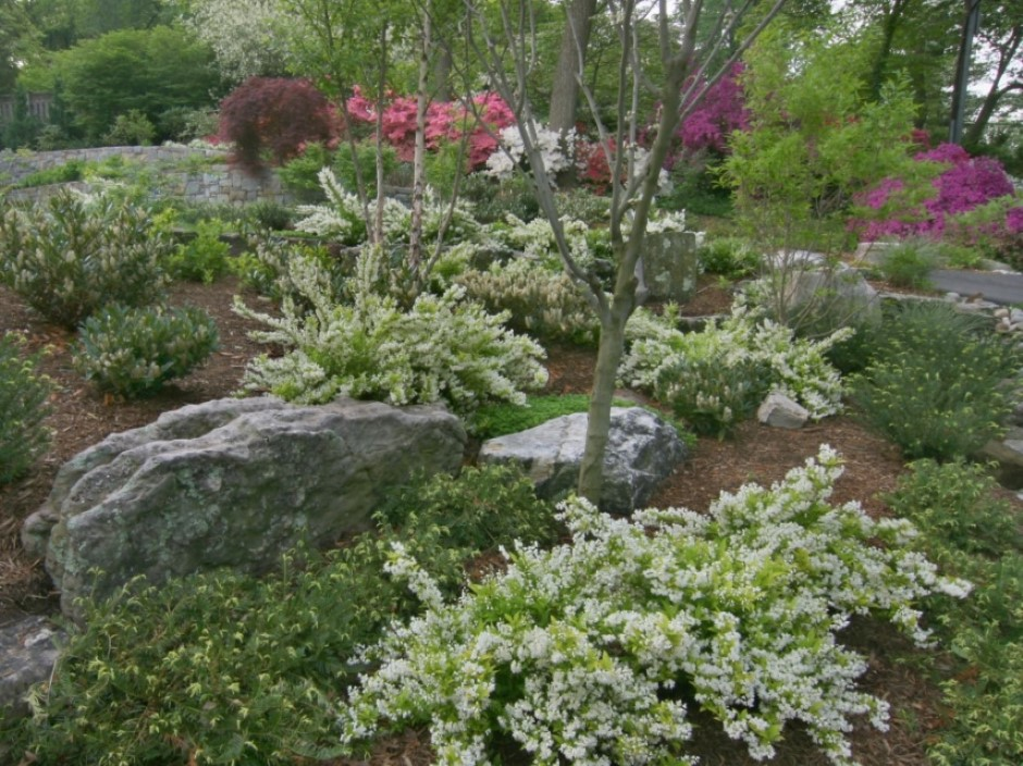 Natural Garden Plantings